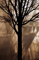 A silhouette of a leafless tree against the exterior of the Libeskind designed London Metropolitan University Graduate Centre